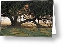 A Tree In Mississippi Greeting Card