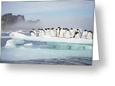 Adelie Penguins On Melting Ice Floe Greeting Card