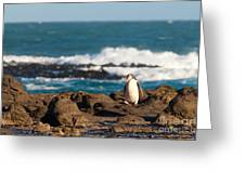 Adult Nz Yellow-eyed Penguin Or Hoiho On Shore Greeting Card