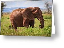 African Desert Elephant Greeting Card