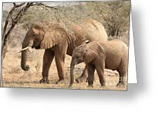 African Elephant Mother And Calf Greeting Card