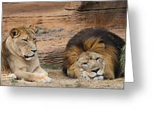 African Lion Couple 3 Greeting Card