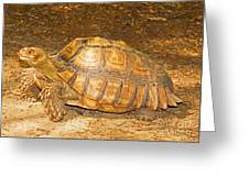 African Spur Thigh Tortoise Greeting Card