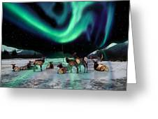 Alaska Aurora Elk Herd Greeting Card