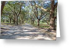 Lowcountry Allee Of Oaks Greeting Card