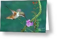 Allens Hummingbird Greeting Card
