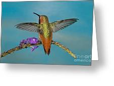 Allens Hummingbird Male Greeting Card