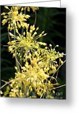 Allium Flavum Or Fireworks Allium Greeting Card