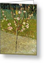 Almond Tree In Blossom Greeting Card