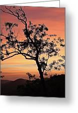 Amicalola Falls Sunset Greeting Card