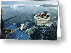 An Inuit Hunter Ferries His Sled Dogs Greeting Card