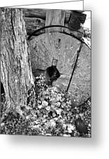 An Old Mill Stone Ely's Mill Roaring Fork Bw Greeting Card