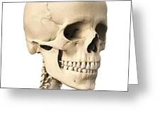 Anatomy Of Human Skull, Side View Greeting Card