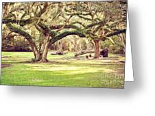 Ancient Oaks Greeting Card