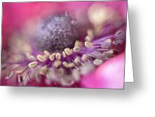 Anemone Greeting Card