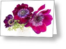 Anemone Trio Greeting Card