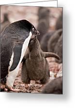 Antarctica, South Shetland Islands Greeting Card