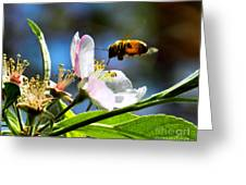 Apple Blossom And Honey Bee Greeting Card