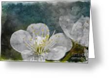 Apple Blossom Photoart Vi Greeting Card