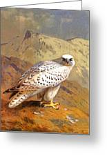 Greenland Falcon Greeting Card