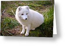 Arctic White Fox Greeting Card