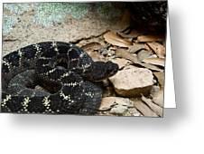 Arizona Black Rattlesnake Greeting Card