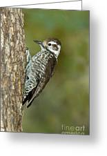 Arizona Woodpecker Greeting Card