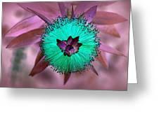 Artistic Bottle Brush Flower Greeting Card