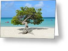 Aruba Divi Divi Tree Greeting Card