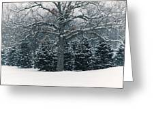As The Snow Flies Greeting Card