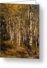 Aspen Forest In Fall Greeting Card