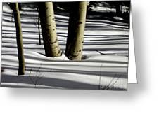 Aspen Shadows Greeting Card