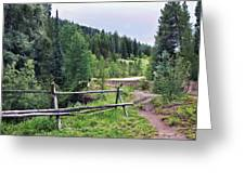 Aspen Trees In Vail - Colorado Greeting Card