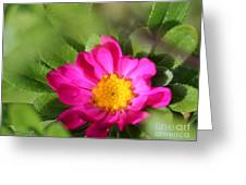Aster From The Daylight Mix Greeting Card