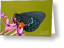 Atala Butterfly Greeting Card