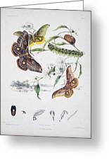 Australian Butterflies Greeting Card