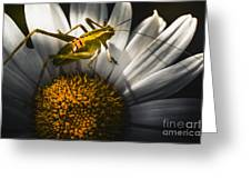 Australian Grasshopper On Flowers. Spring Concept Greeting Card