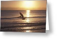 Australian Pelican Glides At Sunrise Greeting Card