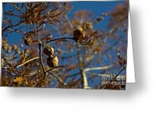 Autumn Coniferous Greeting Card