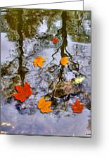 Autumn Greeting Card by Daniel Janda