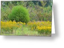 Autumn Grasslands 2013 Greeting Card