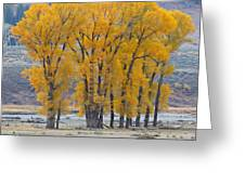 Autumn In The Lamar Greeting Card