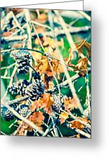 Autumn Leaves And Pinecone Background Greeting Card
