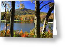 Autumn Trees 1 Greeting Card