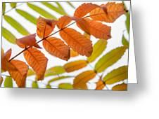 Autumn Upshot Greeting Card