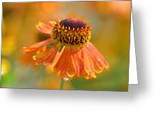 Autumn's Gold 2013 Greeting Card