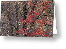 Autumn's Palette Greeting Card