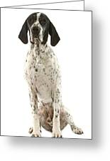 Auvergne Pointer Greeting Card
