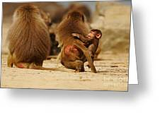 Baboon Family In The Desert Greeting Card