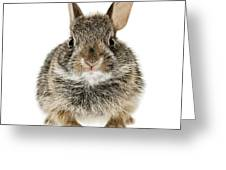 cottontail rabbits essay Burmese python argumentative essay (a such as cottontail rabbits banning importation and the interstate transportation of these invasive snakes is.